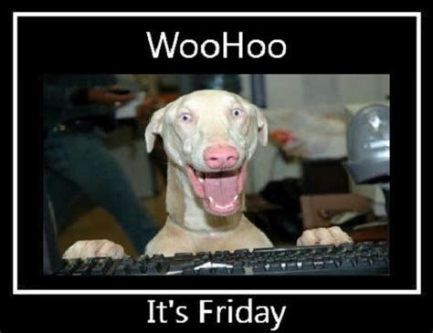 cohabitation effect it s not real says new study on the woohoo it s friday dogs funnydogs weimaraner funny