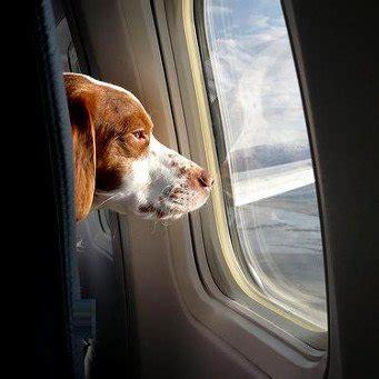 alitalia trasporto animali in cabina finalmente i nostri amici animali non dovranno pi 249