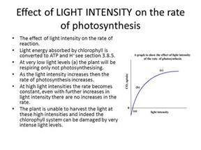 intensity of light essential idea photosynthesis uses the energy in sunlight