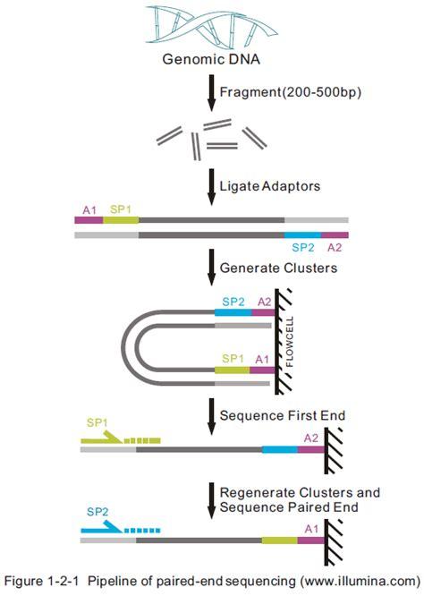 whole genome sequencing illumina transcript quantification with rna seq