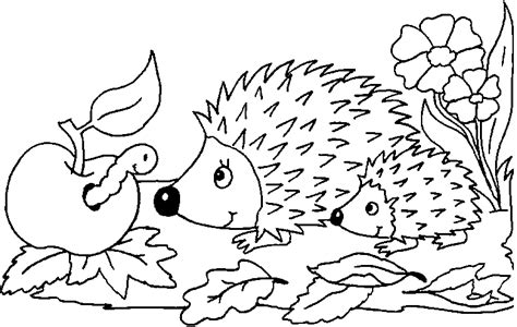 coloring page of a hedgehog hedgehog hidden pictures hedgehog coloring pages