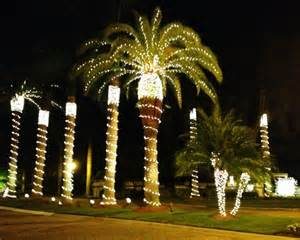 lights on palm tree in florida planting our pennies