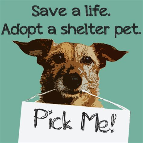 puppy adoption central california spca position on selling of companion animals central