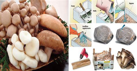 coltivare funghi in casa in cassetta in sacco e nel legno