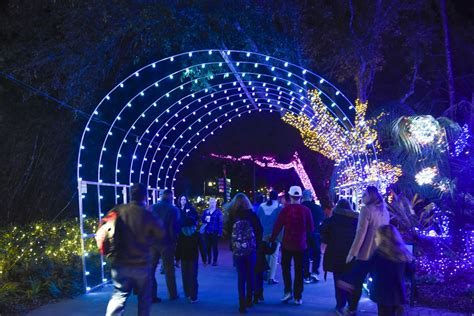 904 Happy Hour Article Christmas Lights Around Jacksonville Zoo Lights