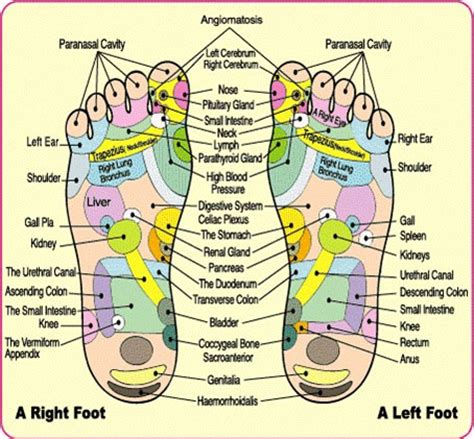 Detox Acupressure by Do Detox Foot Pads Work How And Why Purify Your