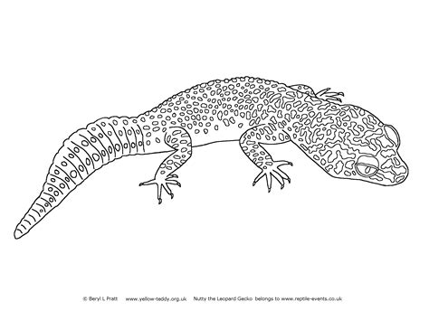free coloring pages of leopard gecko