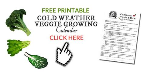 how to grow vegetables outdoors in the winter empress of