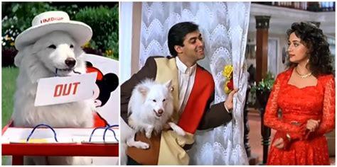 hum aapke hain koun dog images 13 bollywood films where animals stole all the limelight