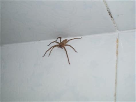 spider in bathroom bathroom spider flashpacking wife 187 blog archive 187