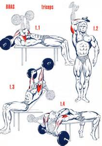 exercices triceps musculation forum forme sport