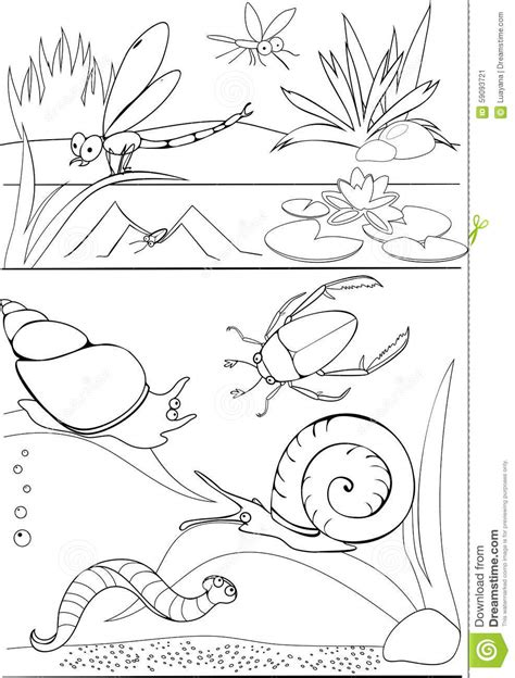 coloring pages of pond animals coloring pages pond animals pond habitat coloring pages