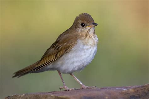 are human behaviors affecting bird communities in
