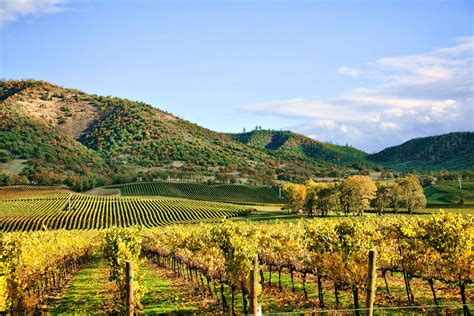 Photo Napa Valley by Northern California In The Fall Moon Travel Guides