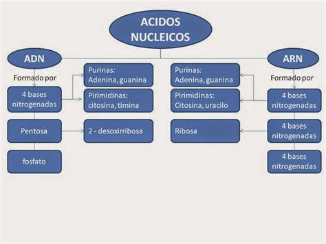 numero de cadenas del adn biologia estructura del adn y sistema reproductor femenino