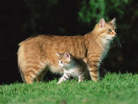 wallpaper of cat family wallpaper cats family photos and free walls