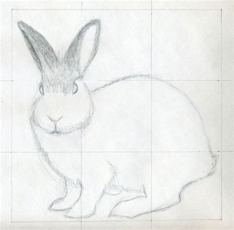 how to sketch how to draw a rabbit