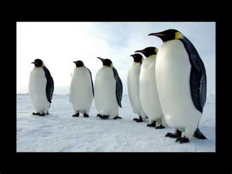 imagenes de animales terrestres animales acu 225 ticos terrestres y a 233 reos para educaci 243 n