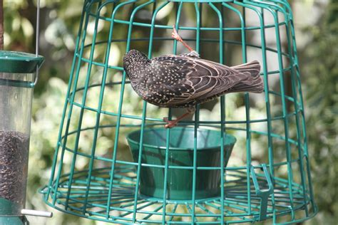 starling proof suet feeder feeding garden visitors