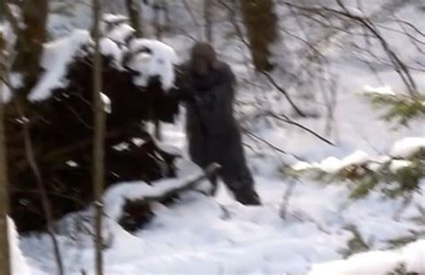 best bigfoot bigfoot evidence possibly the best photos of bigfoot