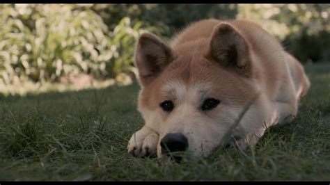 a dogs tale 3 hachi a s tale hd wallpapers backgrounds wallpaper abyss