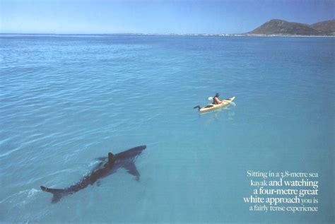 Best Spray Paint For Aluminum - shark kayak jpg