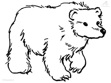 free coloring pages of white bear