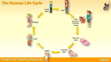 human cycle diagram the human cycle