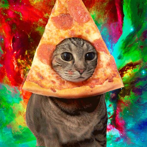pizza kittens pizza cat in space foodfriday pictures
