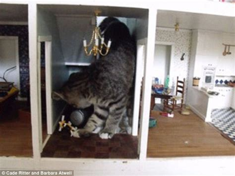 cat doll house kitten destroying a dollhouse nicknamed catzilla and kat kong daily mail online