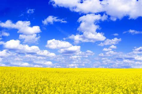 bloemen en wolken veld met gele bloemen en wolken foto gratis download