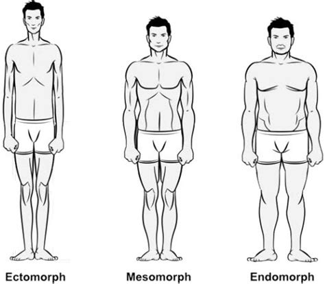 healthy fats for endomorph diet plans for ectomorph and endomorph types