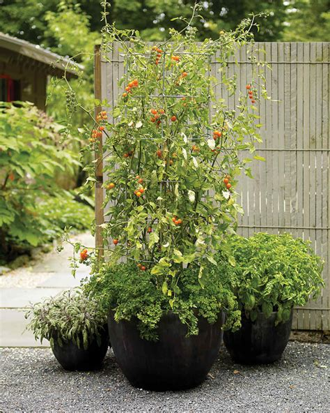 patio tomato container garden ideas for any household martha stewart