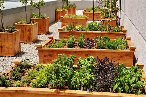 unwins kitchen garden herb kit on sale fast delivery maslow s chef starts a roof top herb garden