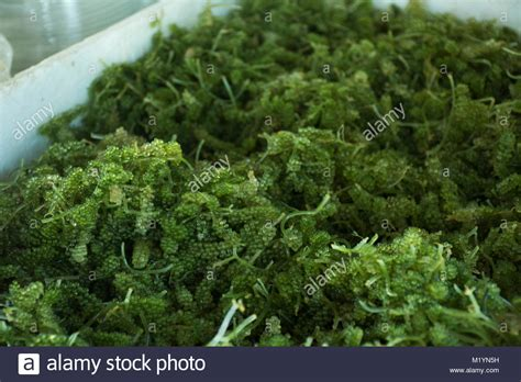 Sho Caviar caviar shop stock photos caviar shop stock images alamy