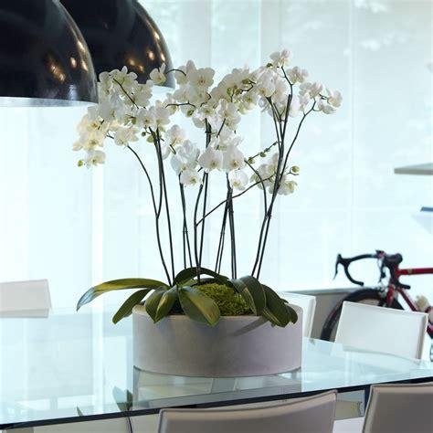 vasi per piante in resina vaso x piante in resina zoe nicoli