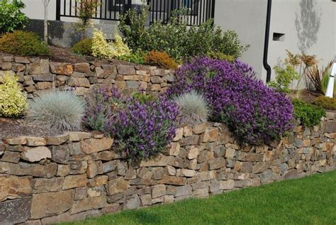 plants that drape over walls love the way the plants drape over the rock maybe with
