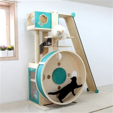 A cat gym for chubby paws and swinging bellies : ???????