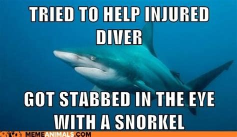 Sad Shark Meme - advice animals memes misunderstood shark but i don t