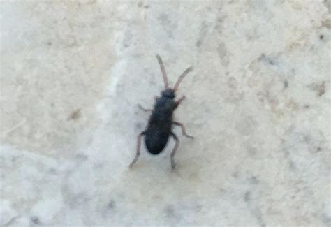 bugs found in the bathroom bugs in the bathroom bed bugs bathroom floor easywash club