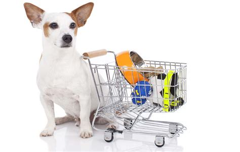 7 Dogs That Make The Best Accessories by Why And Where To Shop For Wholesale Pet Supplies Top