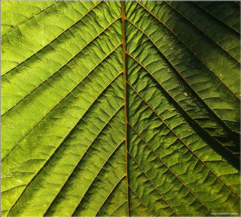 Pattern From Nature | nature s pattern photography 35 outstanding photos noupe