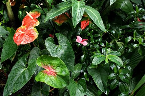 tropical flowers and plants plants tropical free stock photo tropical plants and