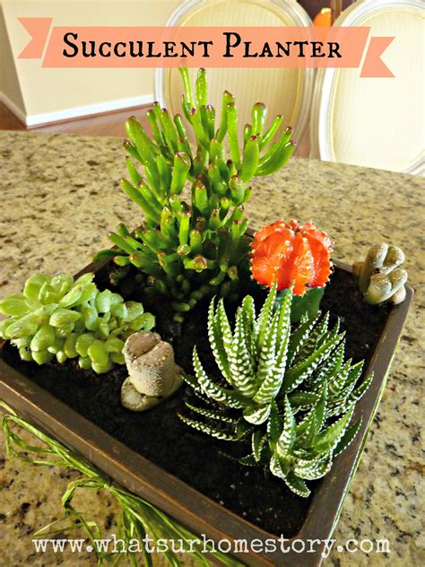 diy succulent how to make a simple succulent planter