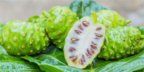 Obat Herbal Mengkudu tanaman obat alami penyakit stroke tanpa efek sing