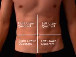 Quadrants of abdomen and organs 9 regions of abdomen new health