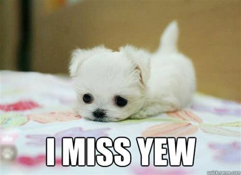 I Will Miss You Meme - i miss you memes gifs images to send when you re