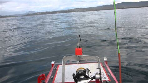 rc boats in the ocean 40cm flathead caught in pacific ocean with remote control