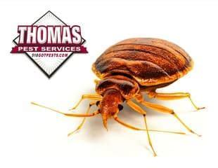 diy bed bug removal diy bed bug treatments are a bad idea