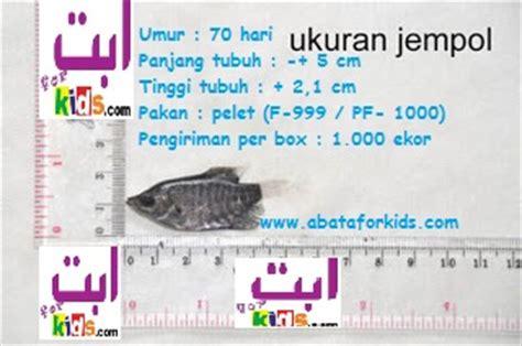 Bibit Ikan Gurame Jogja jual bibit lele sangkuriang dan bibit gurami bergaransi